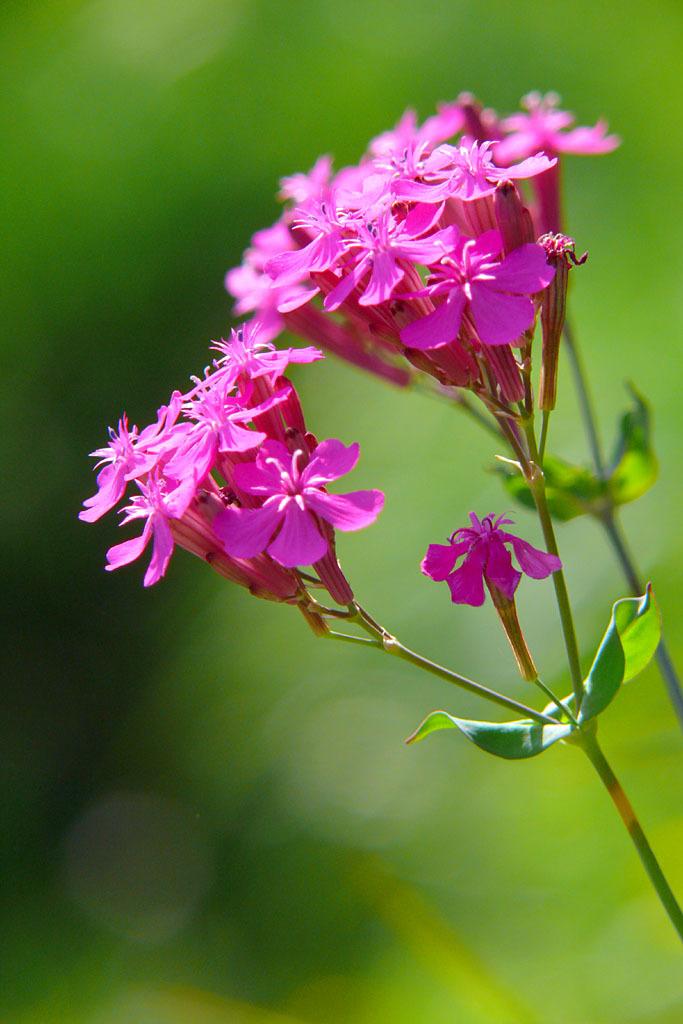 名も分からなき花