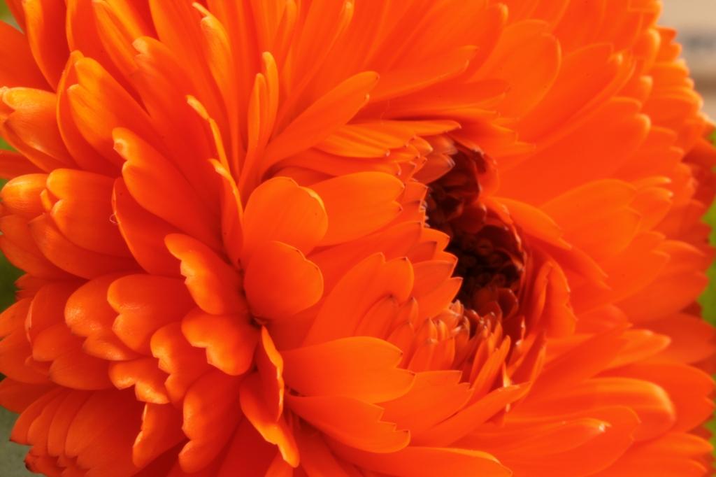 オレンジの重積