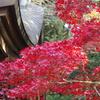 竈神社の紅葉
