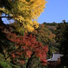 鎌倉の紅葉