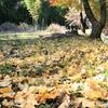 晩秋のたしろの森2