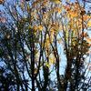 晩秋のたしろの森3