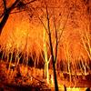 清水寺 林 ライトアップ