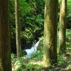 杉の木と渓流