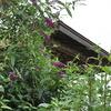 休憩小屋と花々
