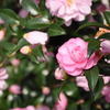 この時期に咲くお花