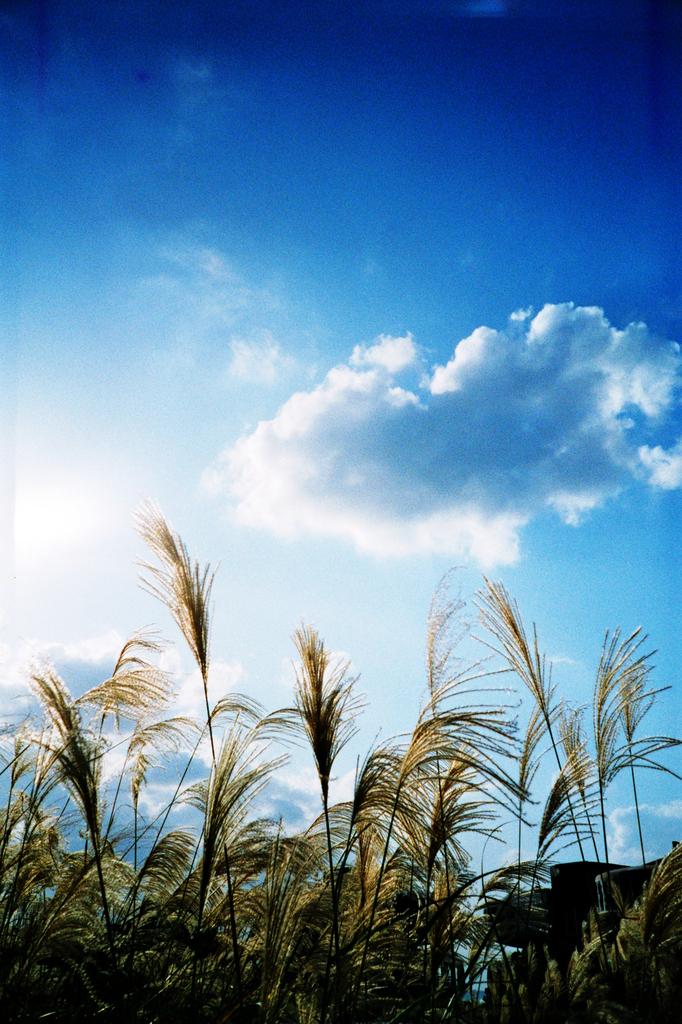 冬の青空 -LOMO  LC-A-