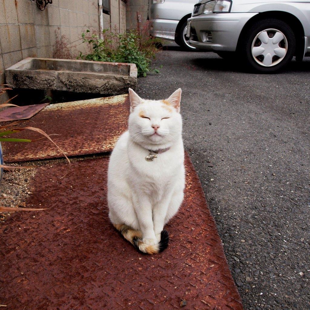 直島の招き猫