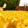 逃げ足と黄色