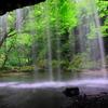自然のカーテン