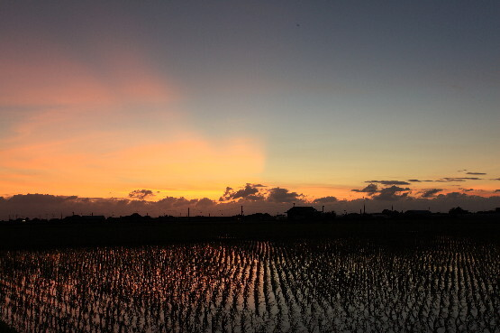水田に夕焼けが映る