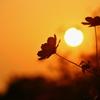 夕陽の中で