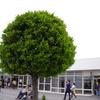 植物のキモチ