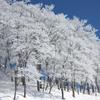 雪樹(八海山)