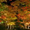 2013年 松雲山荘 紅葉 ライトアップ 鮮彩