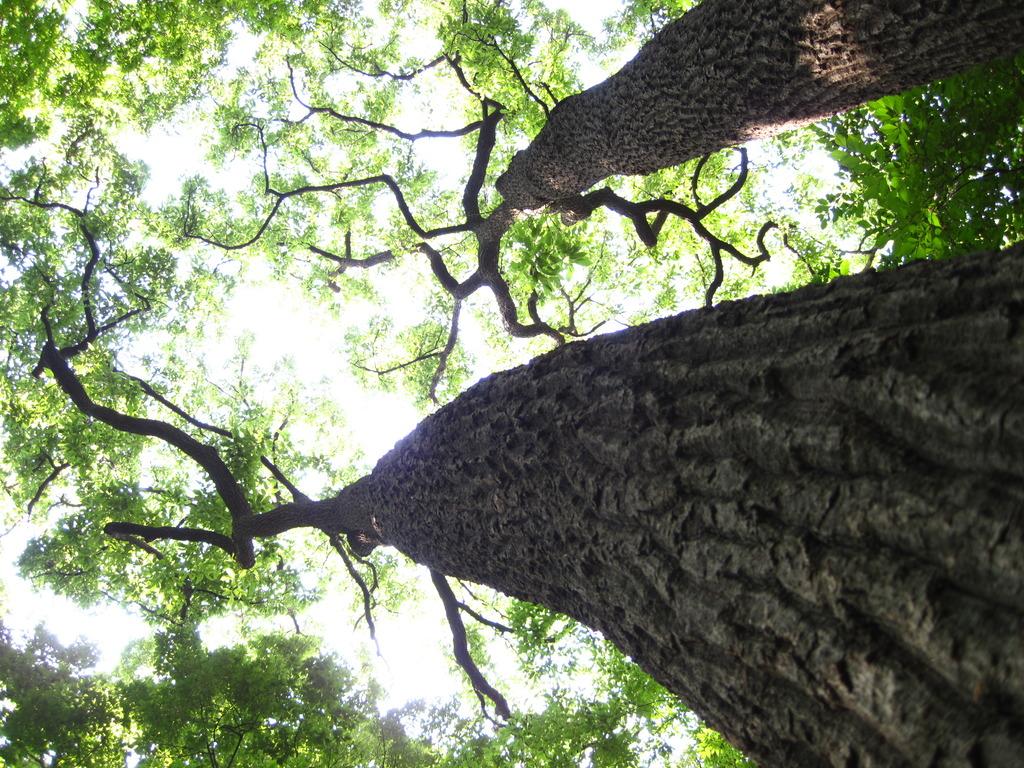 大きな木がたくさん