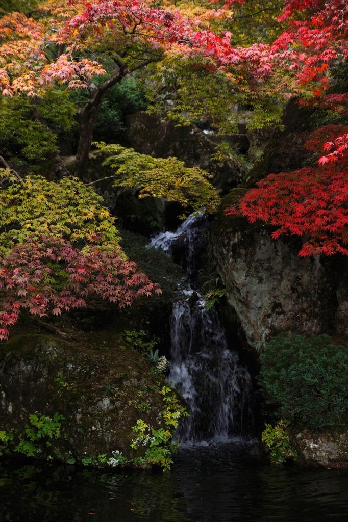 苔庭にある小さな滝