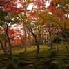 箱根の苔庭