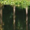 神戸須磨離宮公園の新池(水面)
