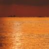 黄金色に染まる播磨灘