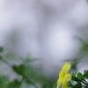 一輪の黄色い花