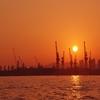 クレーン群に沈む夕日