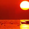 サンセット播磨灘2