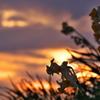 冬の播磨灘に沈む夕日20