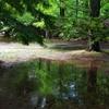 神戸市立森林植物園にて1(水たまり)