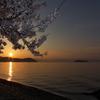 奥琵琶湖桜三昧6(海津大崎1)