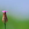 路傍の野草花5