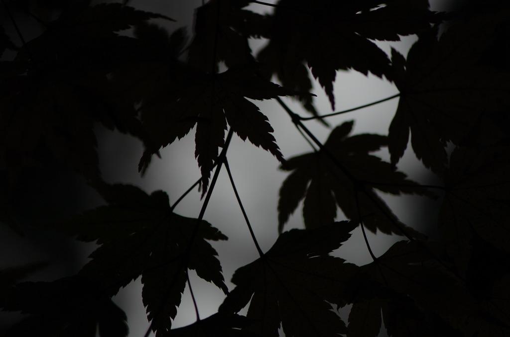 秋の足跡が聞こえる