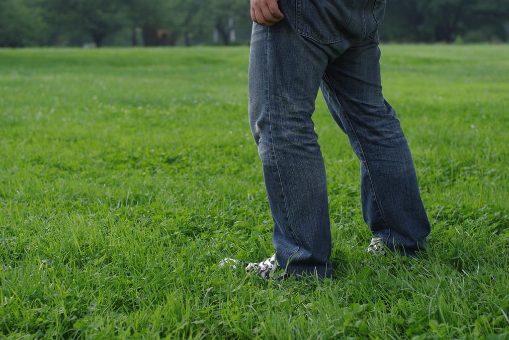フカフカ緑の絨毯