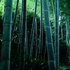 竹林ブルー