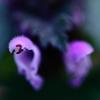 クリオネてきな花