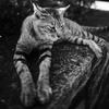 くつろいでいたトラ猫ちゃん