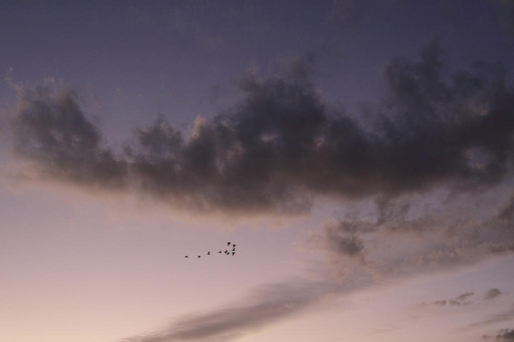 ねぐらへ帰る鳥たち…。