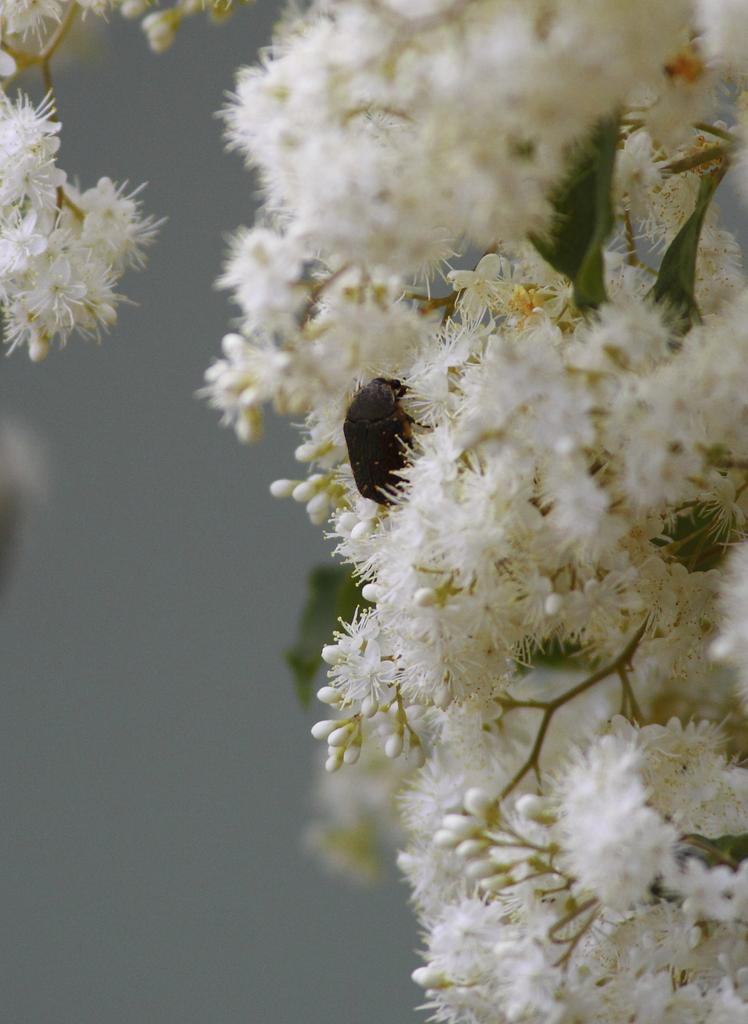 白く柔らかき花に抱かれて