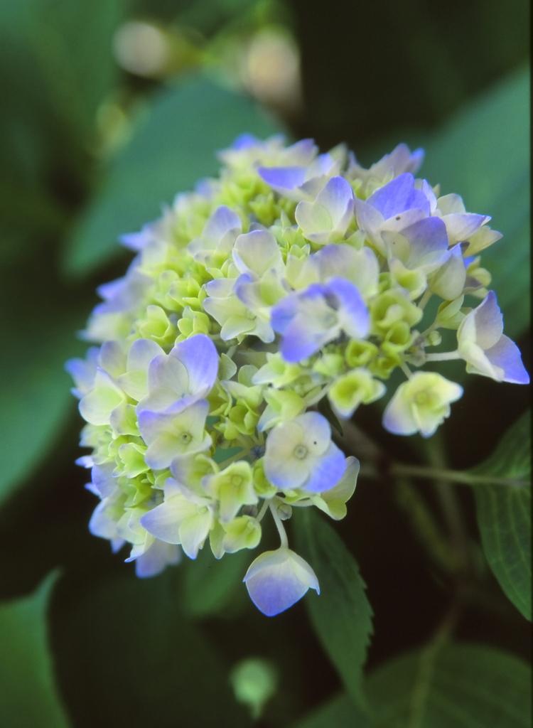 さわやかな花