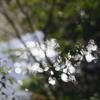 川面の光の反射