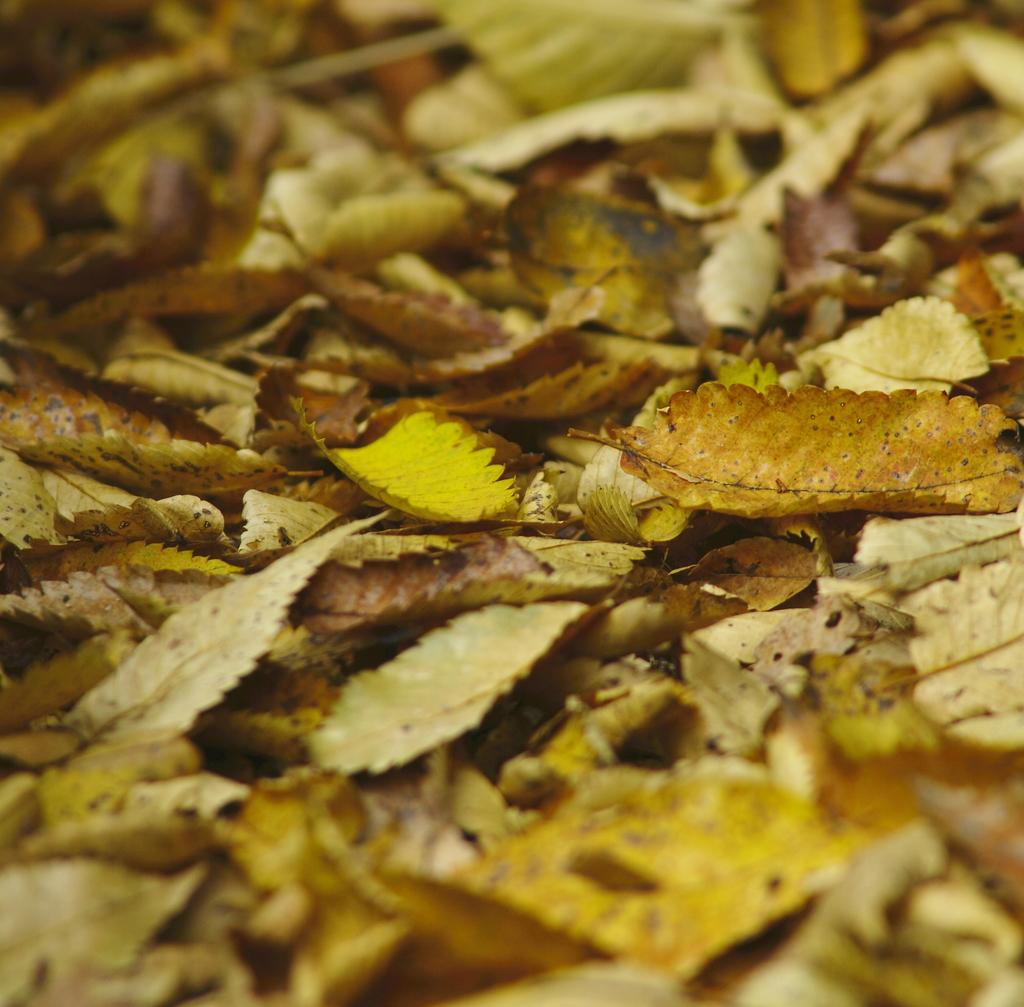 街の公園の落ち葉たち