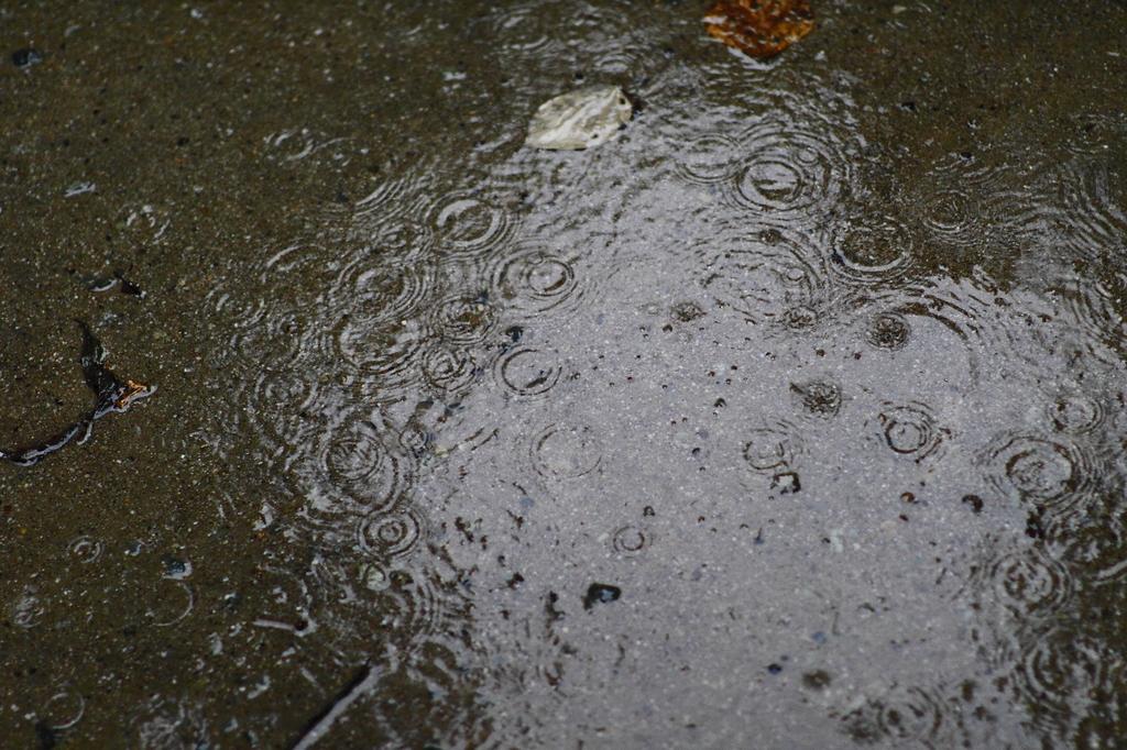 雨の散歩道(未舗装)