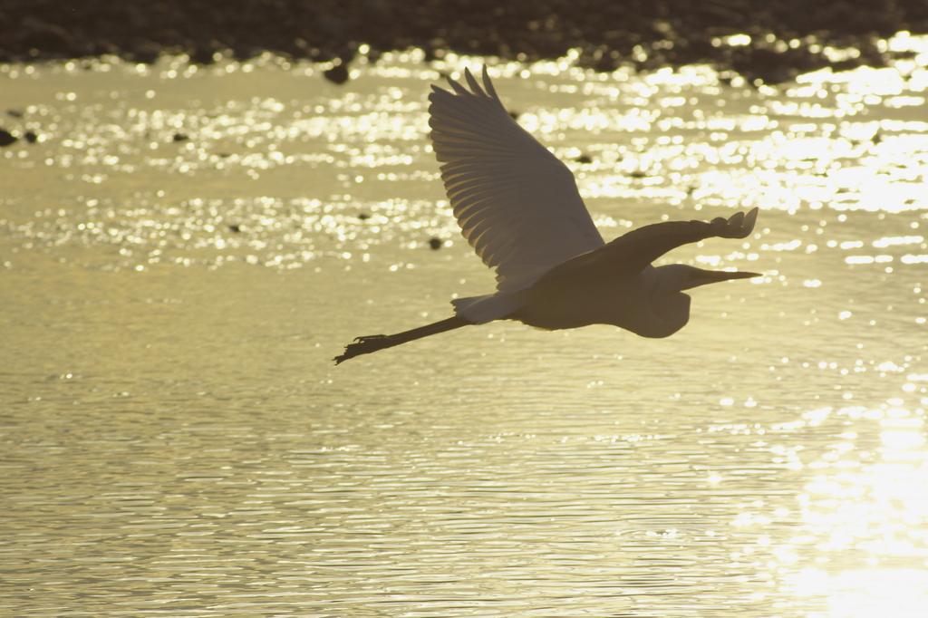 光の中を飛翔する。