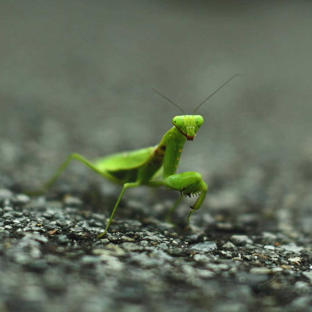 蟷螂 on the street
