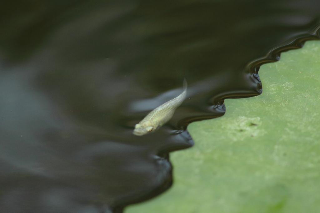 緑の正弦波(sinθ)