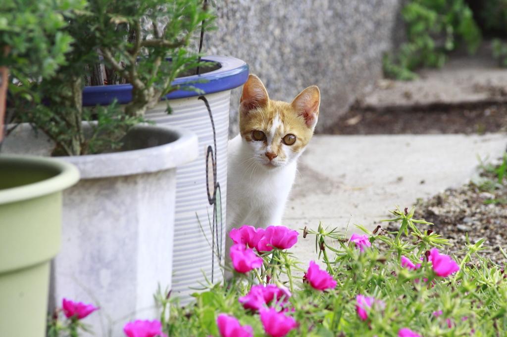 紅い花と野良猫
