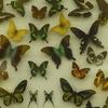 永遠に飛び続ける蝶たち