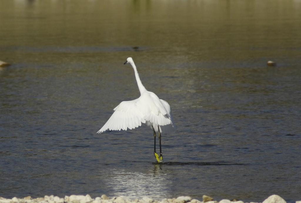 優雅な白鷺ステップ