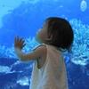 初めての海の世界