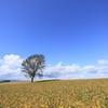 秋空と哲学の木